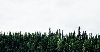 """Дерибан вінницького лісу: як детектор брехні викрив депутата від """"Самопомочі"""""""