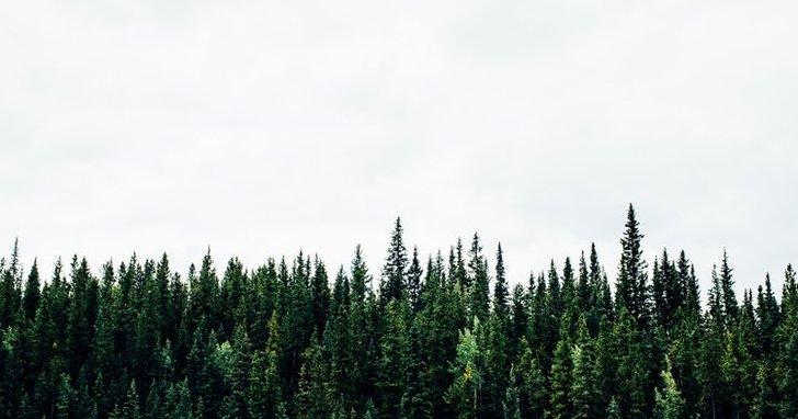 """Фото: Дерибан вінницького лісу: як детектор брехні викрив депутата від """"Самопомочі"""""""