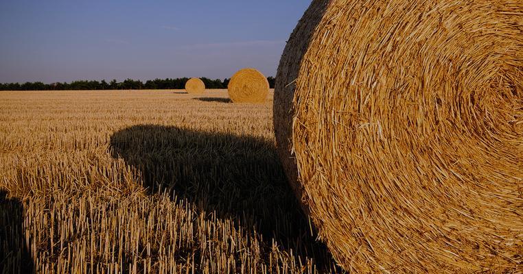 Конфлікт інтересів в  Аграрному комітеті: свині, кури, цукор і зерно