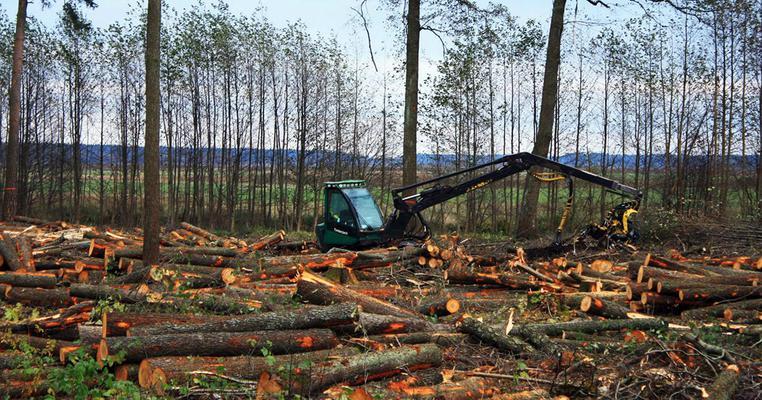 Фото: Чому Ляшко дав зелене світло на вирубку лісів в Україні?