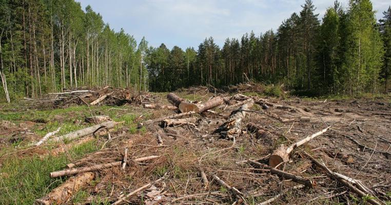 Кримінальна відповідальність за знищення лісів: розмір істотної шкоди знизили з 2 млн до 20 тис. грн