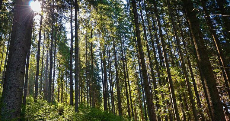 """""""Самопомічівці"""", що підтримали дерибан Вінницького лісу, йдуть від """"Голосу"""" та """"Сили і честі"""""""