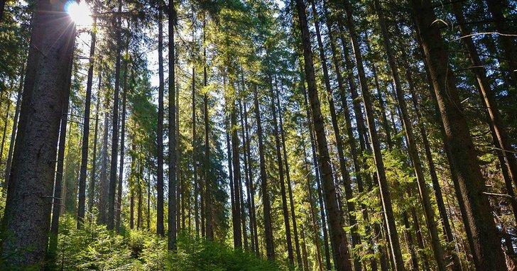 """Фото: """"Самопомічівці"""", що підтримали дерибан Вінницького лісу, йдуть від """"Голосу"""" та """"Сили і честі"""""""