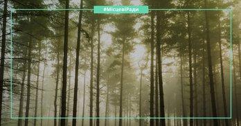 Третє пришестя: для кого Вінницька облрада протягує дерибан 10 гектарів лісу?